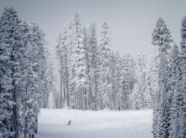 This year's ski season was dominated by huge snowfalls across the country.